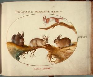 Animalia Qvadrvpedia et Reptilia (Terra): Plate XLVII, c. 1575/1580