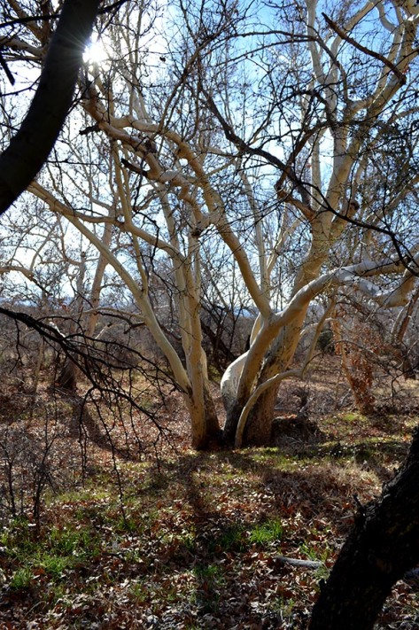 Unlike Montezuma's Well, there were many trees in this area.