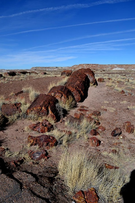 The Petrified Forest is known for its logs, which still lay as they have over the millenia.
