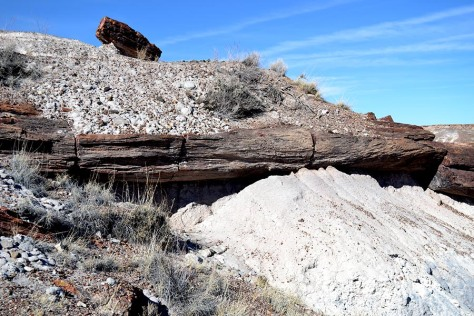 "You can still see where the logs were buried under the sediment for millions of years. Its probably that there are still many pieces buried underneath the earth still today. While petrified wood is not unique to Arizona, this is the only place in the world that a ""forest"" like this exists."
